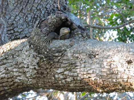 Kulu Blog Jeana Leo Tree Monitor-5