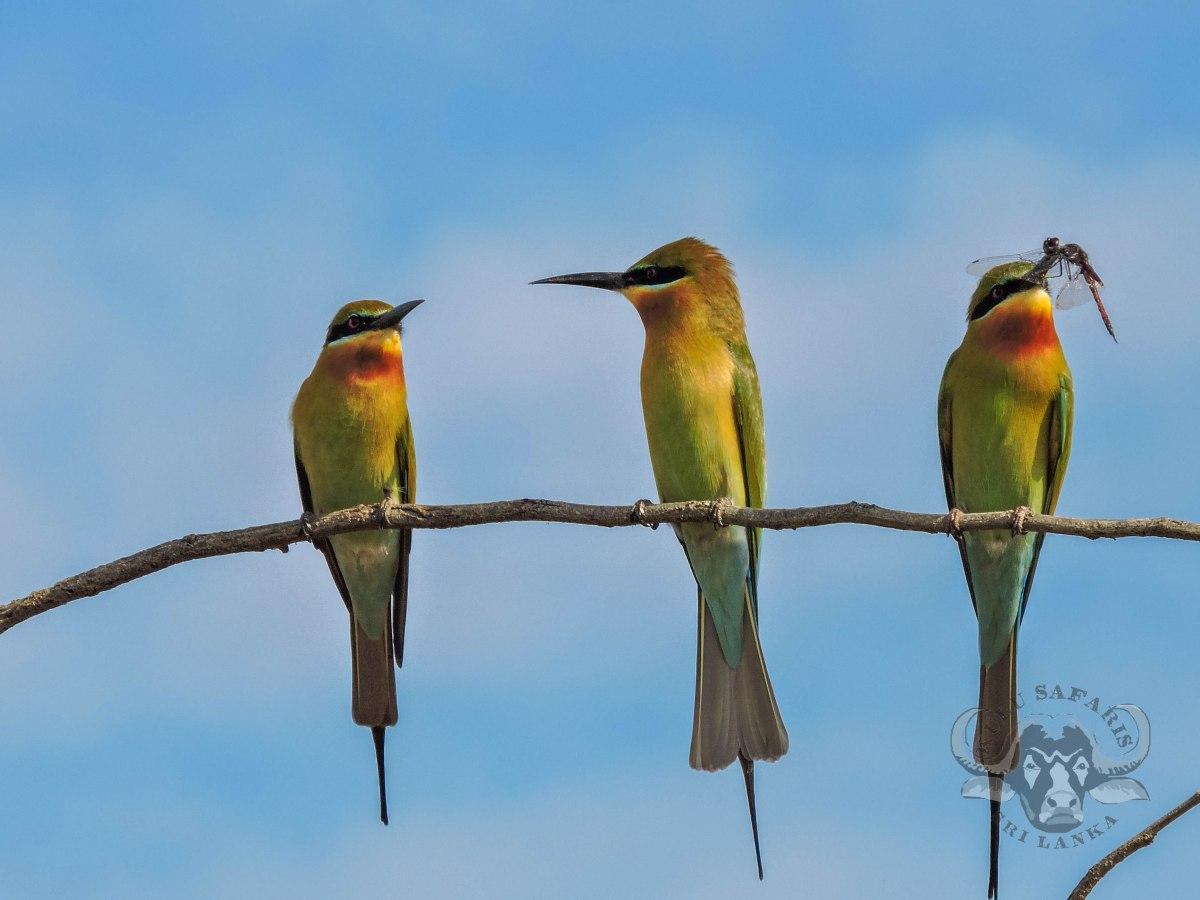 Sri Lanka's Migrant Birding SeasonBegins!