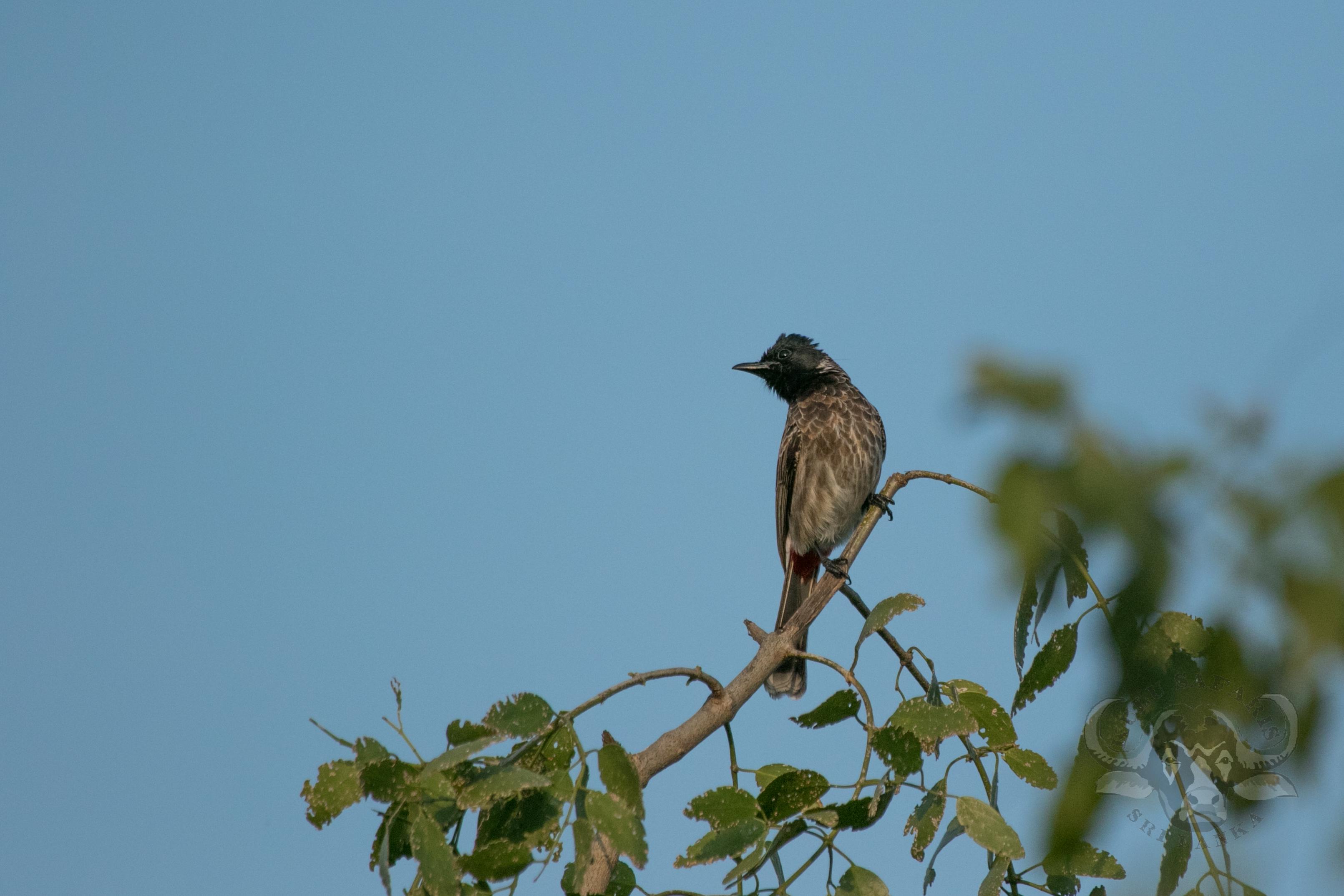 kulu-camp-birds-jan17-sr-wm-1