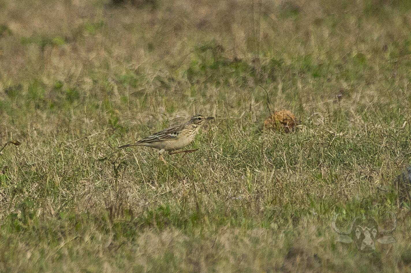 kulu-camp-birds-jan17-sr-wm-12