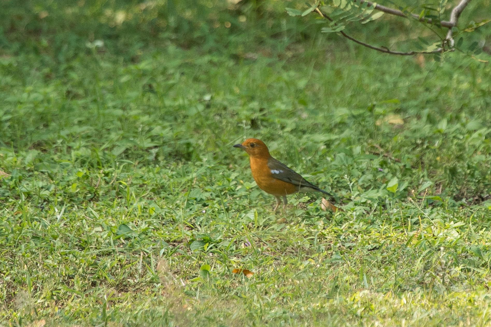 kulu-camp-birds-jan17-sr-wm-18