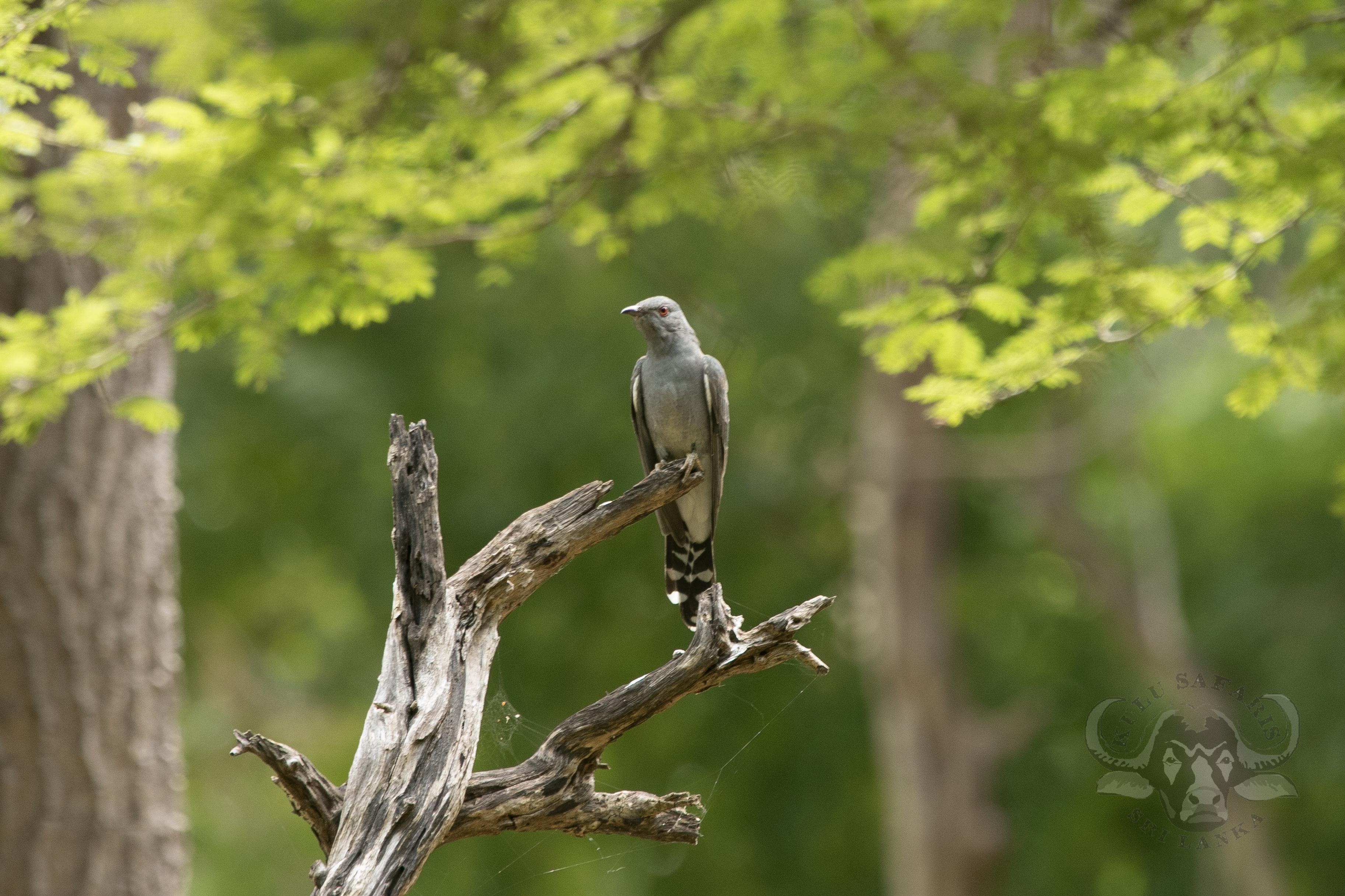 kulu-camp-birds-jan17-sr-wm-28