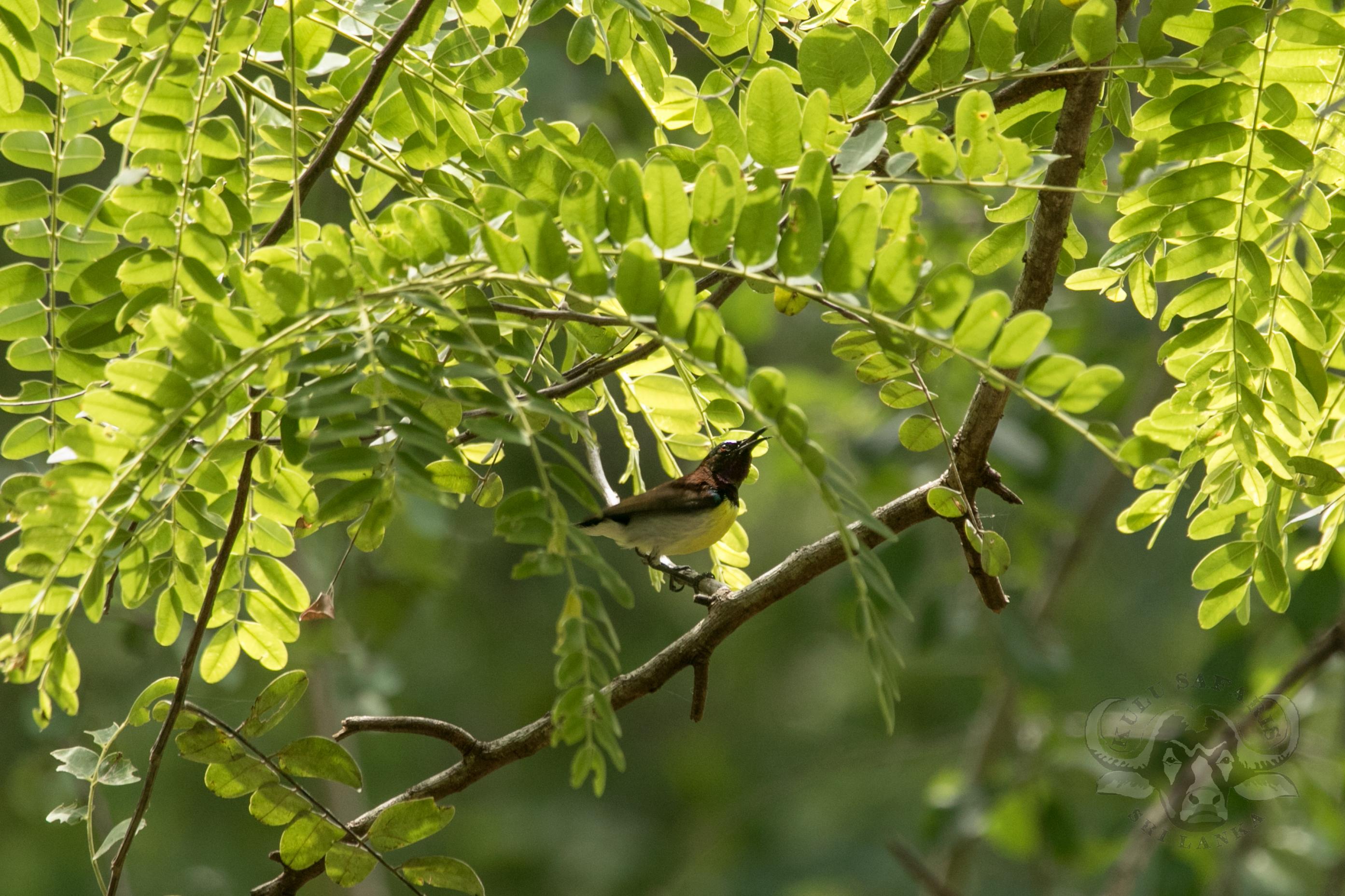 kulu-camp-birds-jan17-sr-wm-40