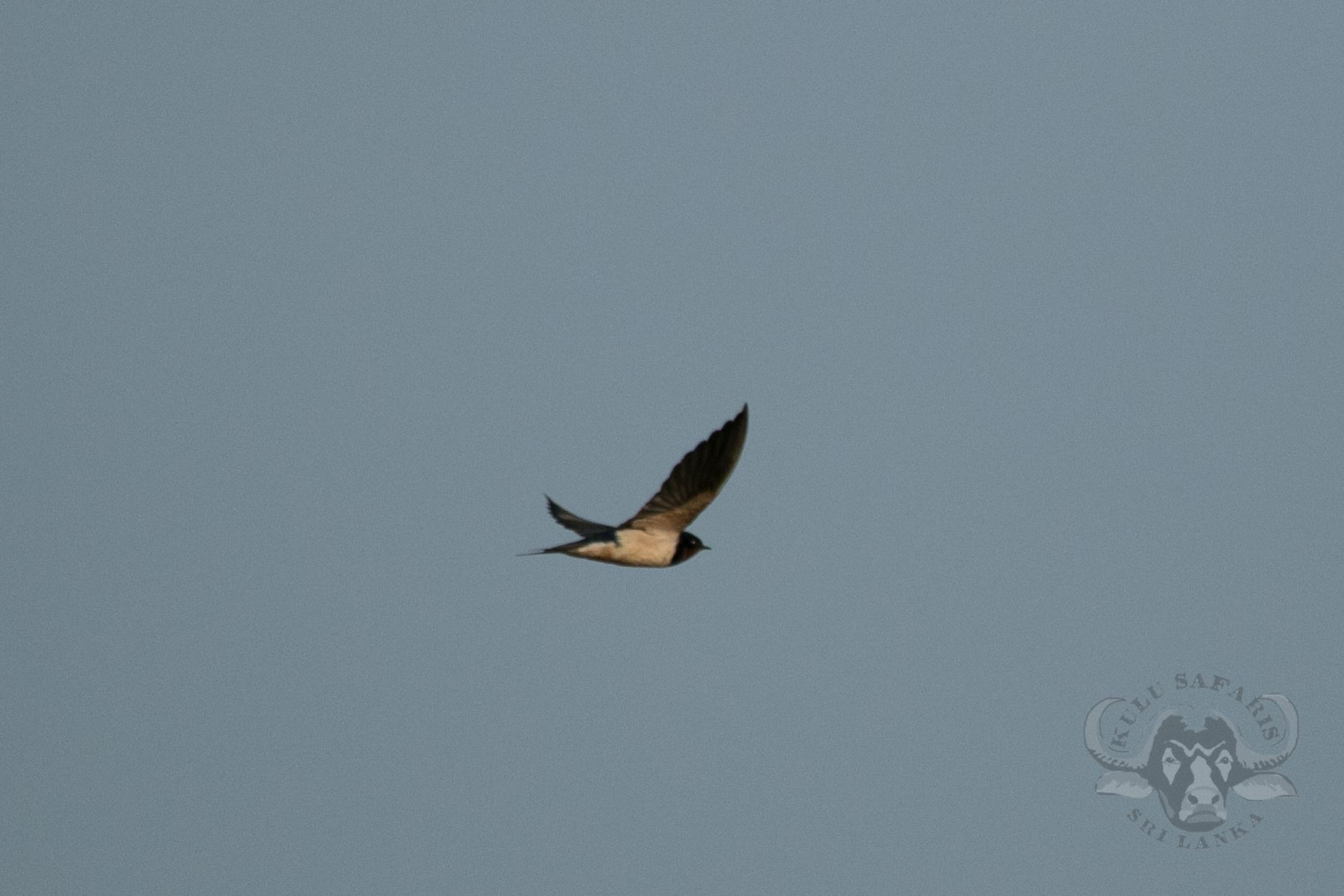 kulu-camp-birds-jan17-sr-wm-6