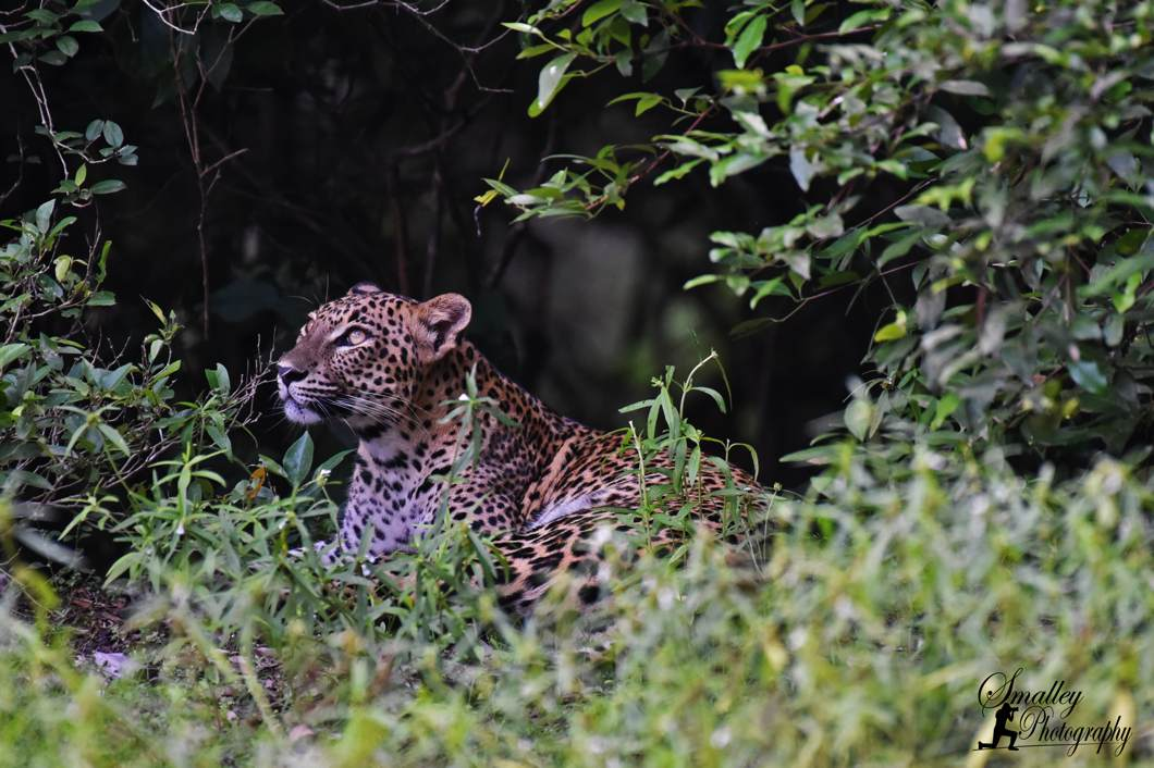 Guest Blog: Epic Leopard Sighting