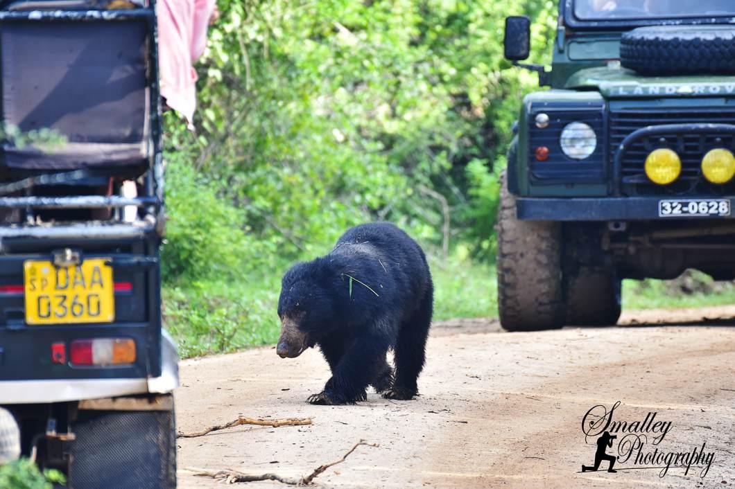 Guest Blog: Sloth BearSighting